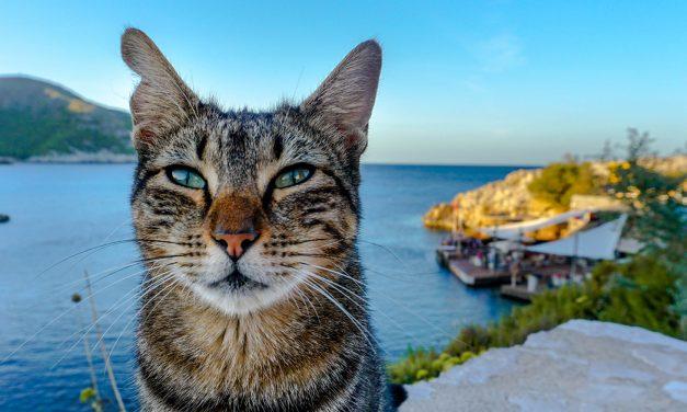 Tierschutz auf Mallorca – eine Herausforderung