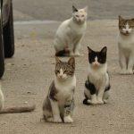Cats Karma – eine beeindruckende Geschichte